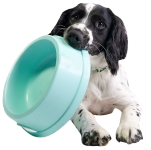 Dogs Bowls